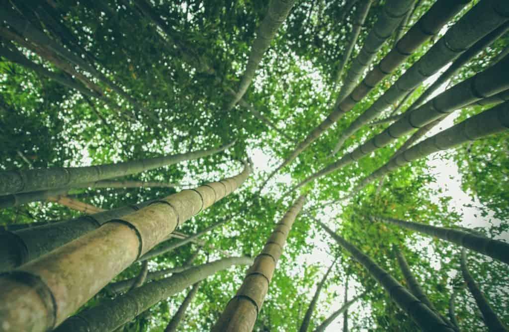 bamboo fabric sustainable